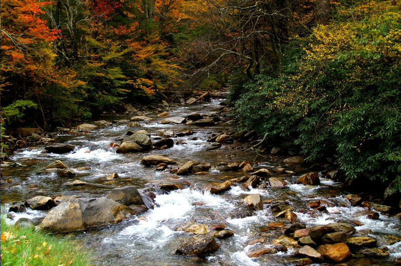 Autumn Leaves And Stream Great Smoky Mountains National Park Tennessee