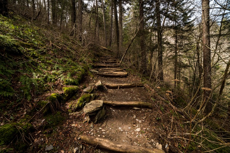 Trail Steps To Clingmans Dome Great Smoky Mountains National Park Tennessee